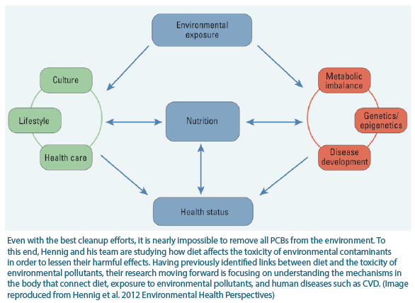 Diagram of how nutrition modulates environmental chemicals. Hennig and his team are studying how diet affects the toxicity of environmental contaminants in order to lessen their harmful effects.