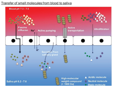Small molecules can transfer from blood to saliva, making it a useful alternative to collecting blood samples. The transfer process involves passive diffusion of lipophilic compounds, active transport of high molecular weight compounds, and ultrafiltration of low molecular weight hydrophilic compounds.
