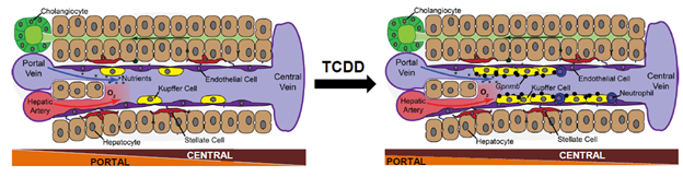 Illustration of snSeq technology characterization of TCDD action.