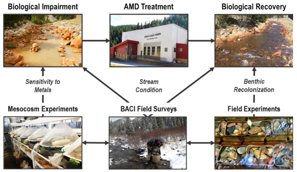 Combining field surveys and experimental approaches can lead to further insights on AMD recovery.