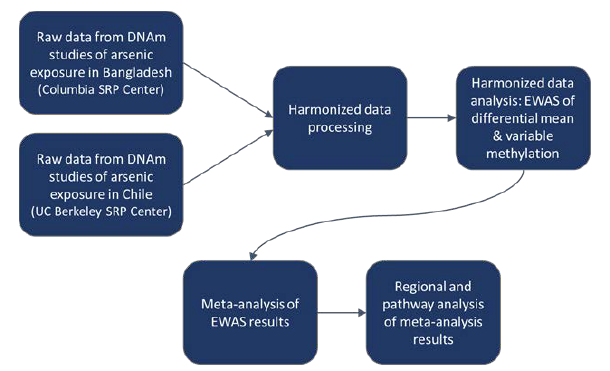 Flow chart showing the data processing and analysis pipeline used by the team. Raw data was combined and processed to complete a harmonized data analysis of EWAS differential mean and variable methylation. This funneled into a meta-analysis of EWAS results and, finally, led to a regional and pathway analysis of the meta-analysis results.